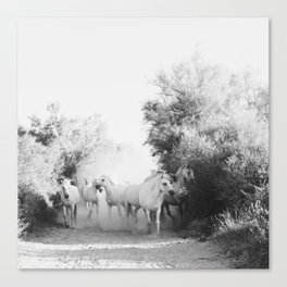 horse print #1 Canvas Print