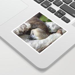 Sleepy 3-toed sloth Sticker