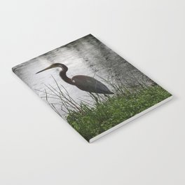 Wild Bird of Paradise Notebook