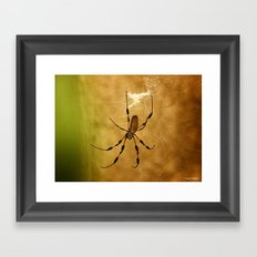Banana Spider Framed Art Print