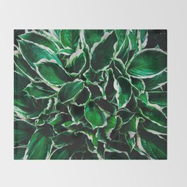 Hosta undulata albomarginata vibrant green plant leaves Throw Blanket