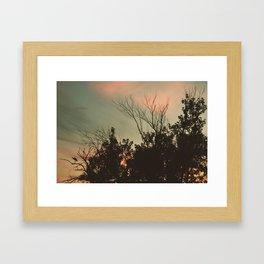 Sunset Perch Framed Art Print