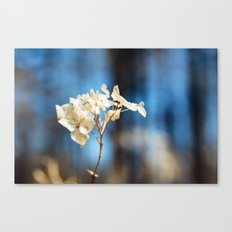 Summer's Ghost I Canvas Print