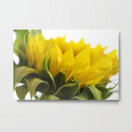 Sunflower V Metal Print