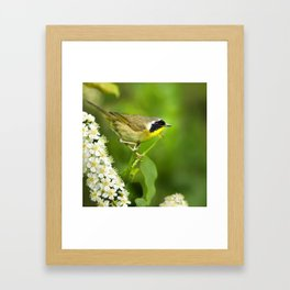 Common Yellowthroat Warbler Framed Art Print