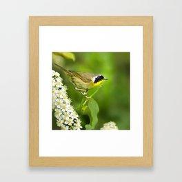 Common Yellowthroat Warbler Framed Art Print