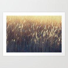 Amber Waves No. 2 Art Print