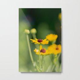 Portrait of a Wildflower in Summer Bloom Metal Print