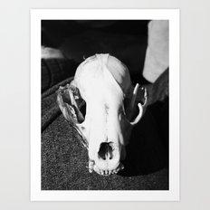 raccoon skull 2016 I Art Print