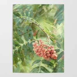 Misty Mountain Ash Poster