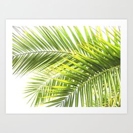 Palm leaves tropical illustration Art Print