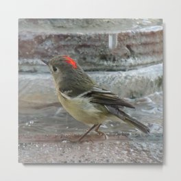 Ruby-Crowned Kinglet At The Fountain Metal Print