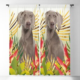 Weimaraner Dog in garden Blackout Curtain