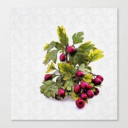 Rowan (Sorbus aucuparia L., Pyrus aucuparia Syn, Gaertner)2 Canvas Print