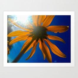 Daisy umbrella Art Print