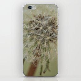 Dandelion (1) iPhone Skin