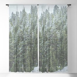Snow Bank Woodlands // Photograph of the Dense Blue Green Evergreen Pine Tree Forest Sheer Curtain