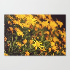 Sigue el camino de margaritas amarillas Canvas Print