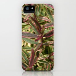 hebe iPhone Case