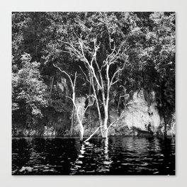 TREE old die. Canvas Print