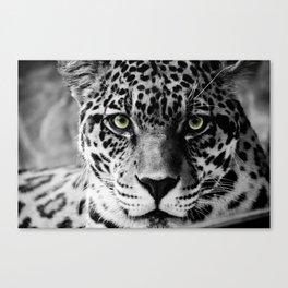 Leopard B&W Canvas Print