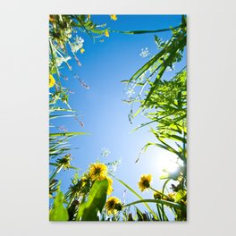 Sunny Summer Canvas Print