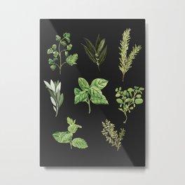 Delicate Herb Illustrations on Black Metal Print