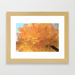 Autumn Explosion Framed Art Print
