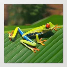 Green Tree Frog Red-Eyed Canvas Print