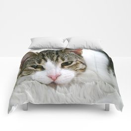 Kloeh the rescued cat Comforters