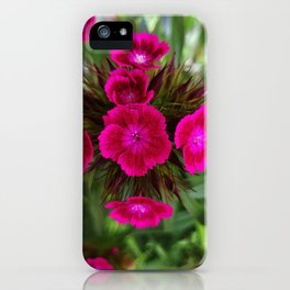 Blossoming garden carnation, magenta color iPhone Case