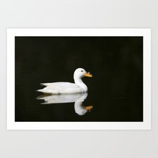 White Duck Black Water Art Print