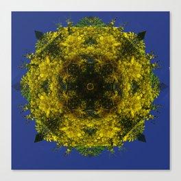 acacias-amarillas Canvas Print