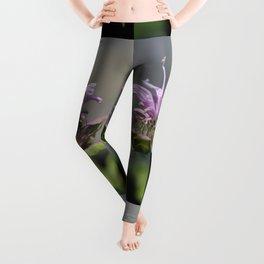 Bee Balm named Panorama Lavender Leggings