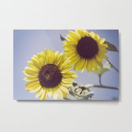 Aged Sunflowers Against Sky Botanical / Floral / Nature Photograph Metal Print