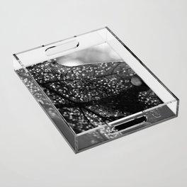 Breaking Fragments Acrylic Tray
