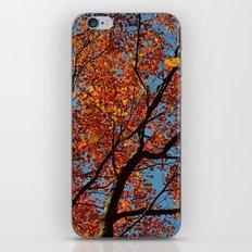 Fall Colors iPhone & iPod Skin