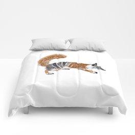 Numbat Myrmecobius fasciatus Comforters