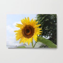 une seule fleur Metal Print