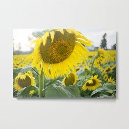 here comes the sun. Metal Print