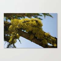 moss Canvas Prints featuring Moss by Emily Werboff