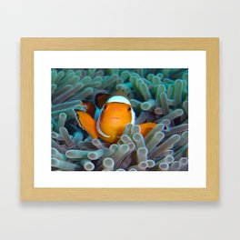 clowning around Framed Art Print