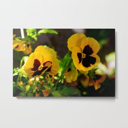 Yellow pansy garden Metal Print