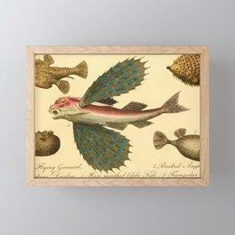 Vintage Print - Bullock's London Museum & Pantherion (1812) - Gunnard; Angler; Globefish etc Framed Mini Art Print