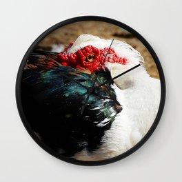 Muscovy Duck Wall Clock