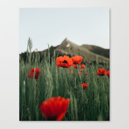 Poppies popping at Chautauqua Park Canvas Print