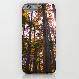 Looking up through redwood trees iPhone Case