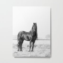 Dark Horse, Black and White Nature Photography Metal Print