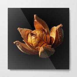Mahogany Seeds DPG150525 Metal Print