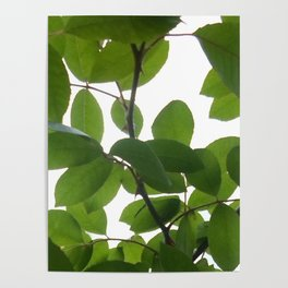 Tree and light Poster